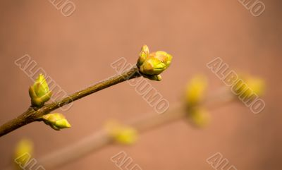 Spring on a beige background