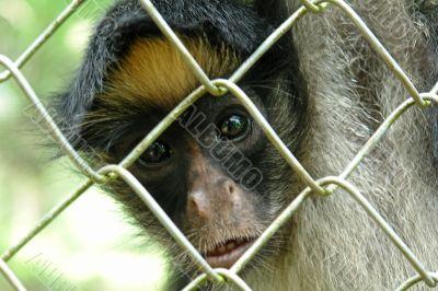 amazonian rainforest monkey