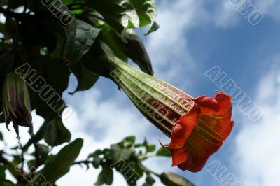 the ecuadorian flower