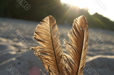 feathers against the sun