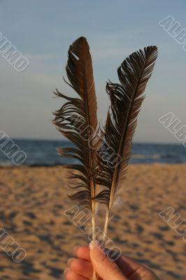 feathers against beach