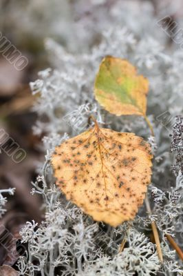 The beginning of the autumn