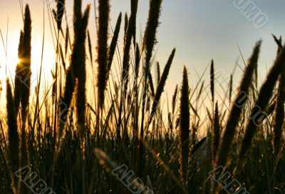 rushes in the setting sun