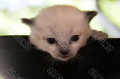 Newborn kitten looking from the top