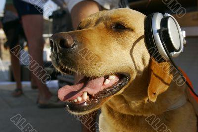 dog in headphones