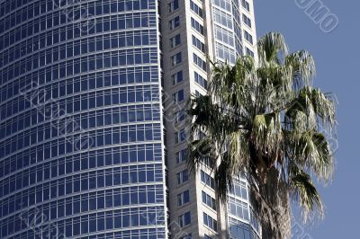 Palm Tree And Office Building