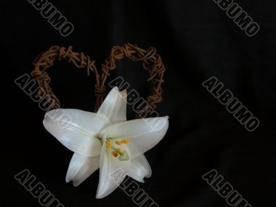 Lily with Rusted Barbed-Wire Heart