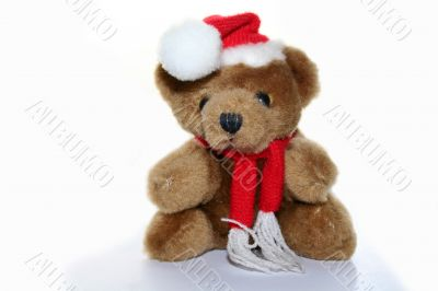 teddy bear in christmas red cap and red scarf