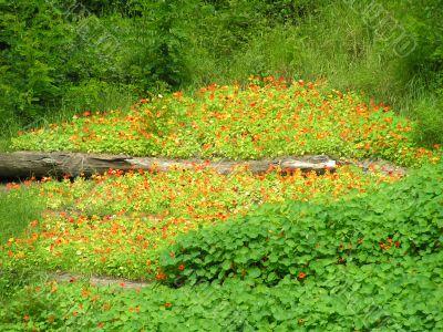 Log among flowers oif nasturtium