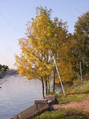 Tree in Riverside