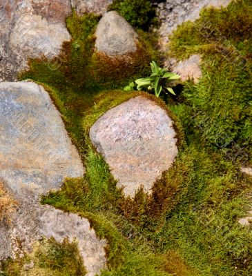 Stones in a moss