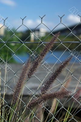 Furry Grassy Weedy Things and Wire Fence
