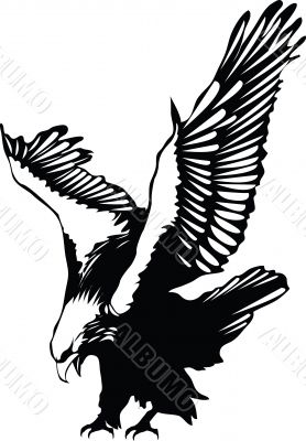 Vector flying eagle graphic