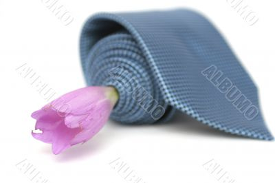 Lilac flower and blue tie on a white background