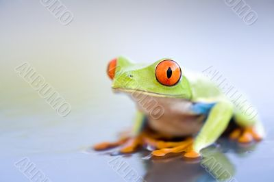 frog on wet metal closeup