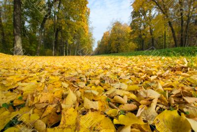 autumnal leaves in a park, shallow focus