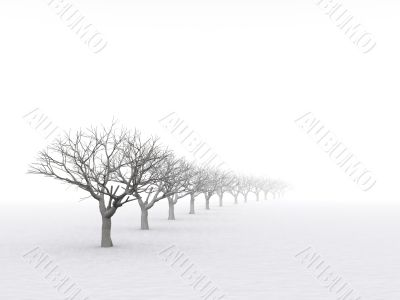 trees in misty haze