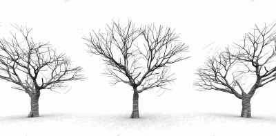 trees in a winter day