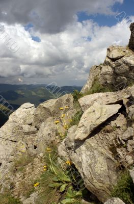 Mountain, stones and flowers