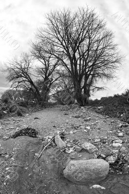 dry riverbed bw