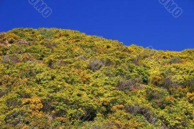 Bright landscape. Blue sky, yellow-green bush.