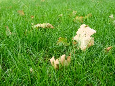 green grass with little leafs
