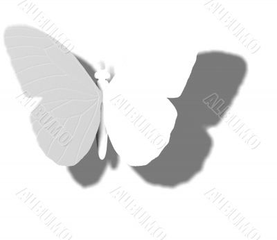 White Butterfly Outline Shadow