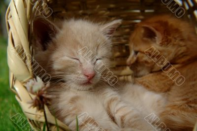 two sleeping kittens in the basket