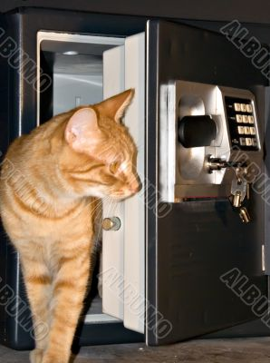 Open safe door with orange tabby stepped out