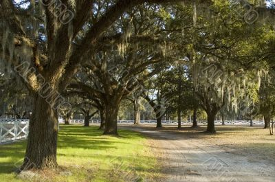 Country lane with overhanging Spanish moss