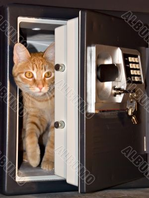 Safe with tabby cat stepping out