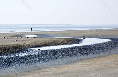 Beach at Low Tide