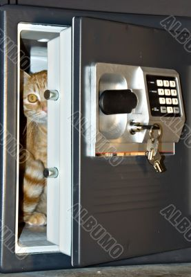 Open safe door with cat inside