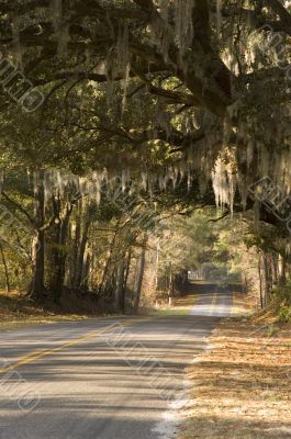 Paved country road with overhanging spanish moss