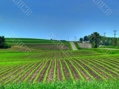 Spring Crop Fields