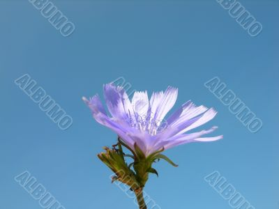 Gently flower on a background of blue sky