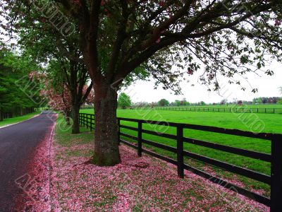 Lush Irish Pasture