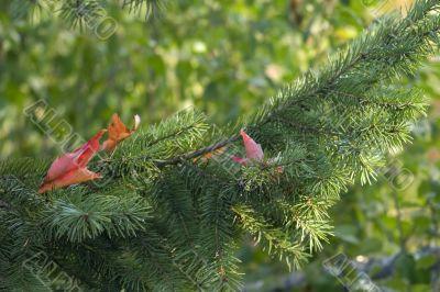 Seasonal fall background
