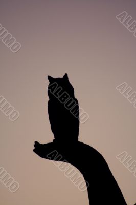 Silhouette Owl on a Limb