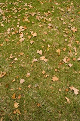 Leaves at the park