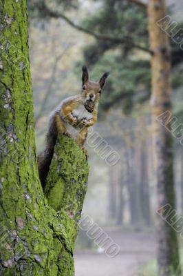Fiber on a tree