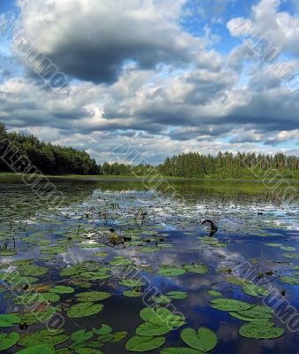 clouds and water lilies