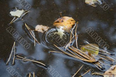 soap bubble in puddle