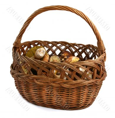 basket full of wild mushrooms
