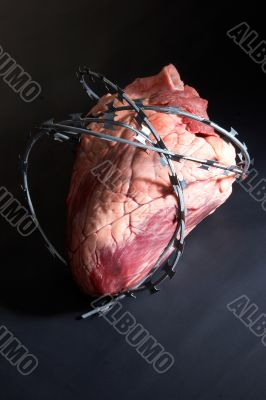 Heart wound  barbed wire.