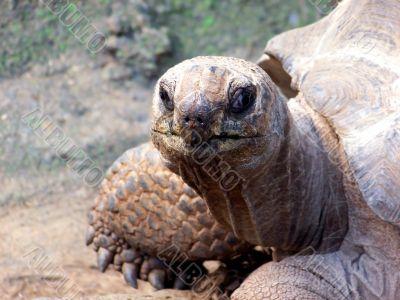 Tortoise Stare