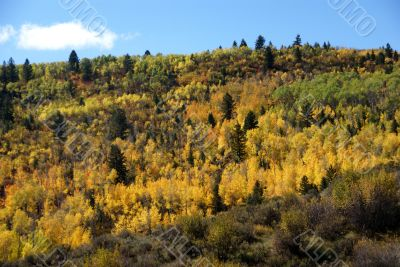 Fall colors in Idaho hills