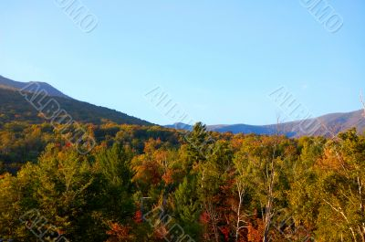 mountain foliage