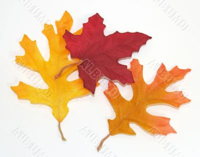 Pile of Autumn Leaves Over White