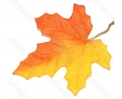 Orange Yellow Blended Maple Leaf Over White